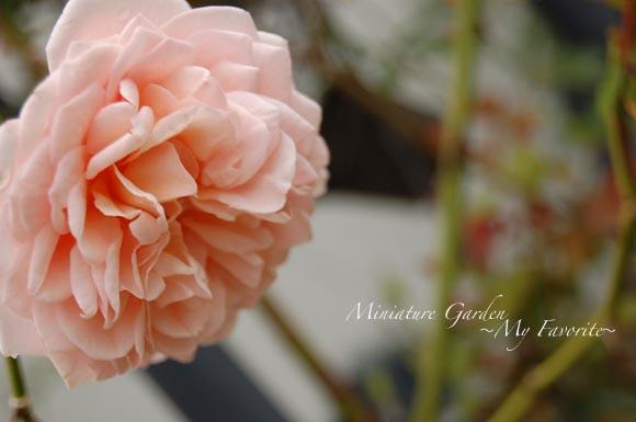 aburahamdarby2.jpg