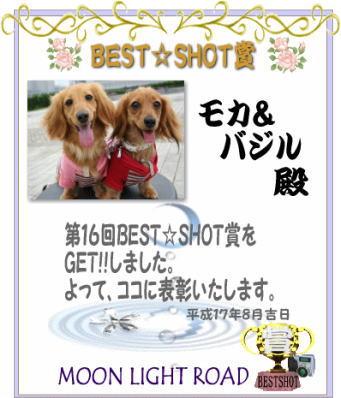 bestshot.jpg