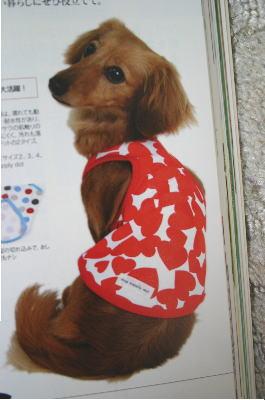 dogf2.jpg