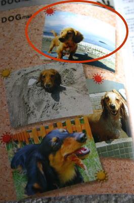 dogmail2.jpg