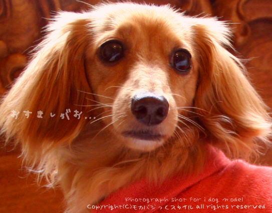 fuwa9.jpg