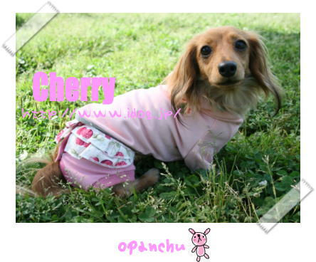 panchu8.jpg