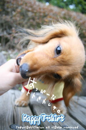 yousei18.jpg