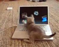 動物おもしろムービー*マックvs猫