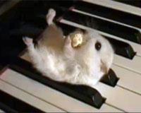 ピアノの上のハムスター