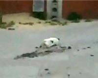 狙っていた獲物を逃したネコが、極端にガッカリするムービー