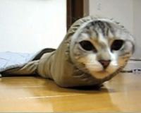 イモムシなネコ