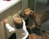 dog trains a baby 赤ちゃんのしつけをする犬