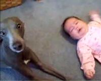 しつけのいい犬と赤ちゃん