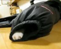 かくれんぼ Hide-and-seek