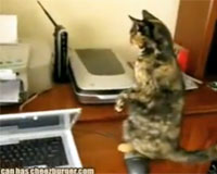 Molly the cat, meet the printer...