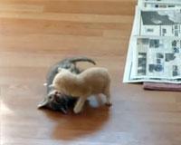 Kitten Surprise!! (how to break up a cat fight) THE ORIGINAL