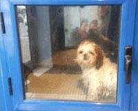 犬用洗濯機