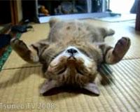 畳の上で眠るツネオ君♪