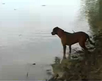 Brutus, the fishing dog