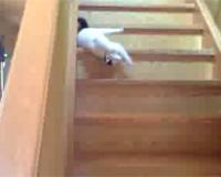 階段で遊ぶ猫