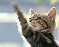 猫、オスは左利き、メスは右利き