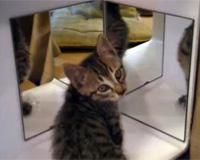 鏡に映る自分が解せぬ猫