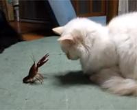 ザリガニと戦う猫