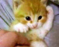 ずっと子猫のターン!