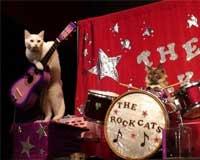 猫のサーカス団