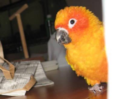 2010 11-8 diary