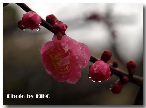 春雨にうたれて