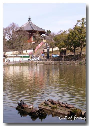 猿沢の池(奈良興福寺前)