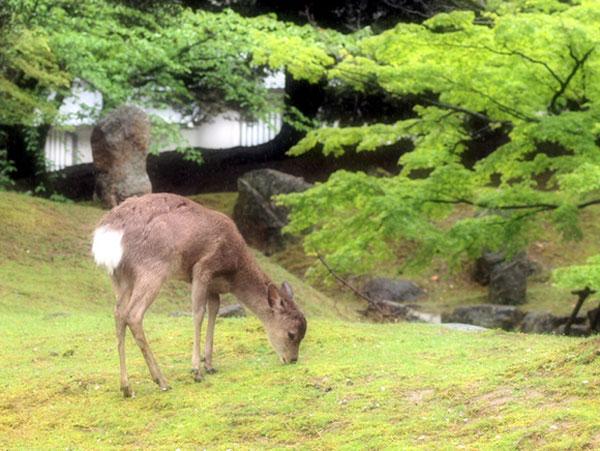 奈良公園で