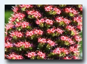 小さな花の集まり