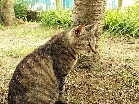 長居植物園のネコちゃん