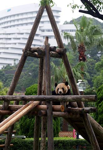 幸浜のお父さんパンダ
