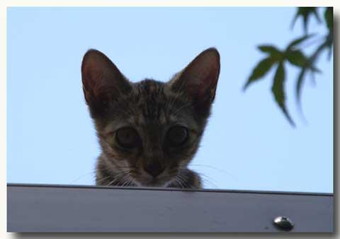 屋根まで来たっちゃ