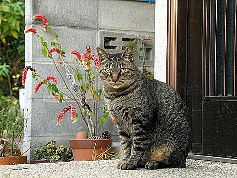 お留守番の猫ちゃん