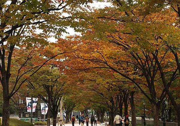 中之島公園メインストリート