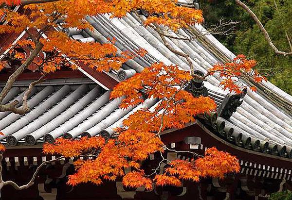 桜門の紅葉