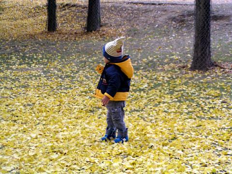 落ち葉の中の小人さん?