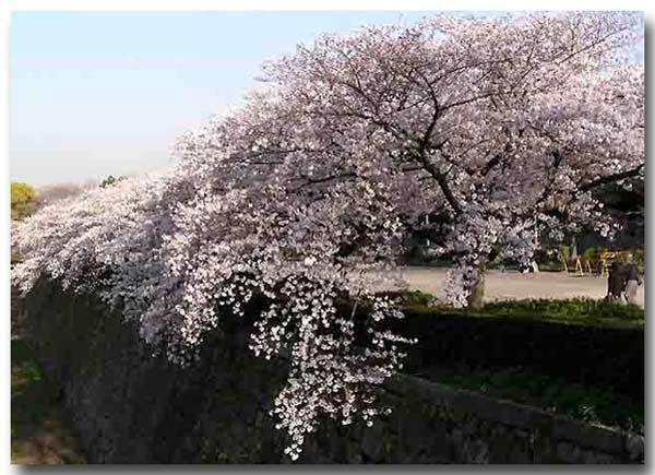 大阪城桜門から
