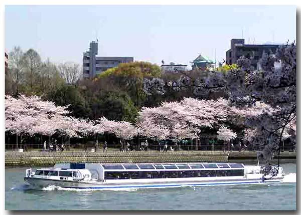 大川の桜・通り抜けから