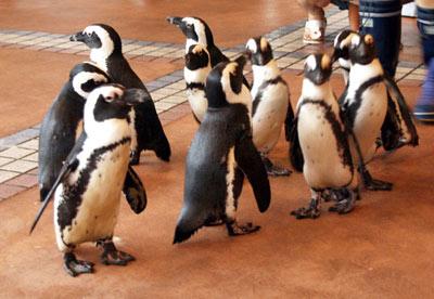 ペンギンの行列
