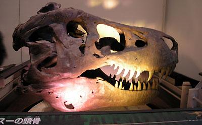 スーの頭蓋骨