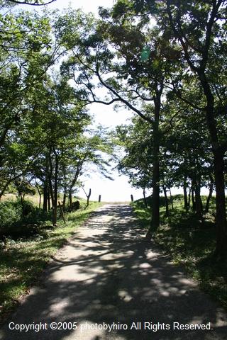 木漏れ日の坂道