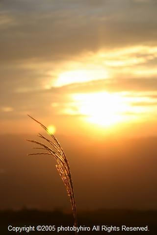 秋風と夕陽