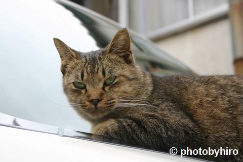 初めての猫写真