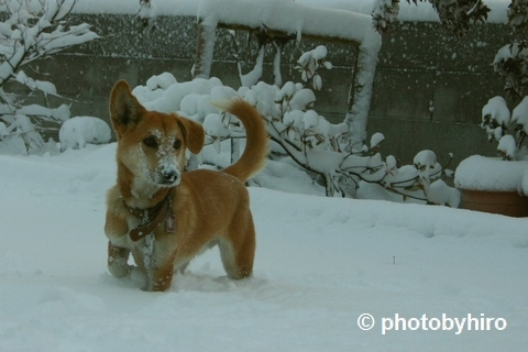 またまた大雪