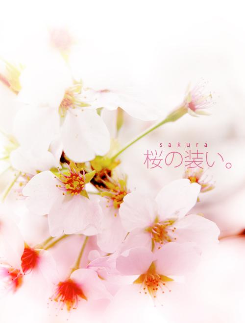kazu422.jpg