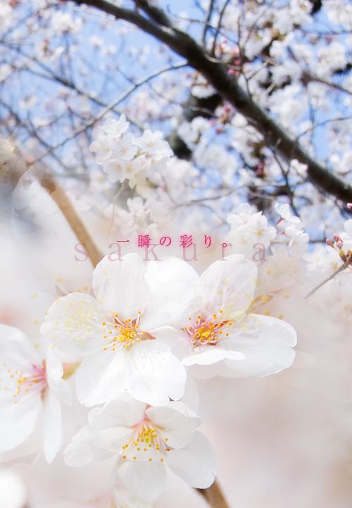 kazu463.jpg