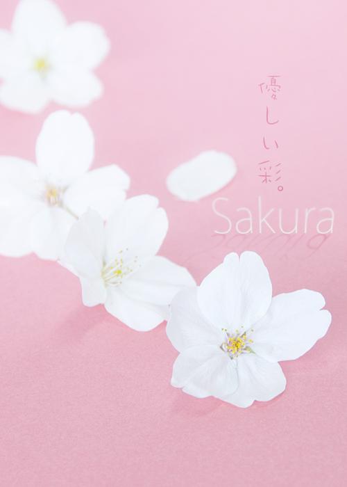 kazu468.jpg