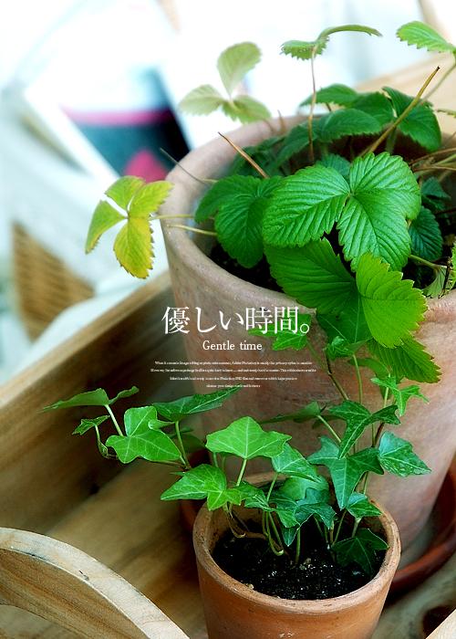 kazu564.jpg