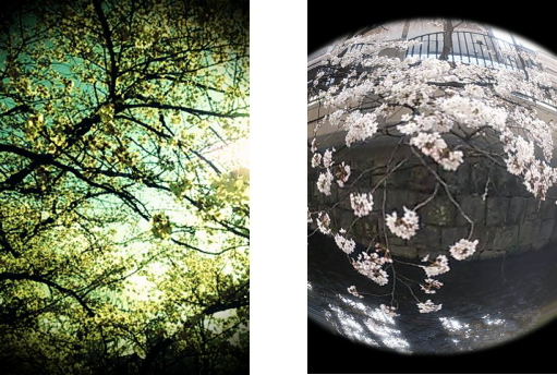 桜 木屋町